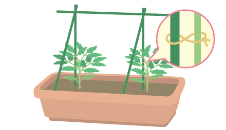 ミニ トマト 支柱