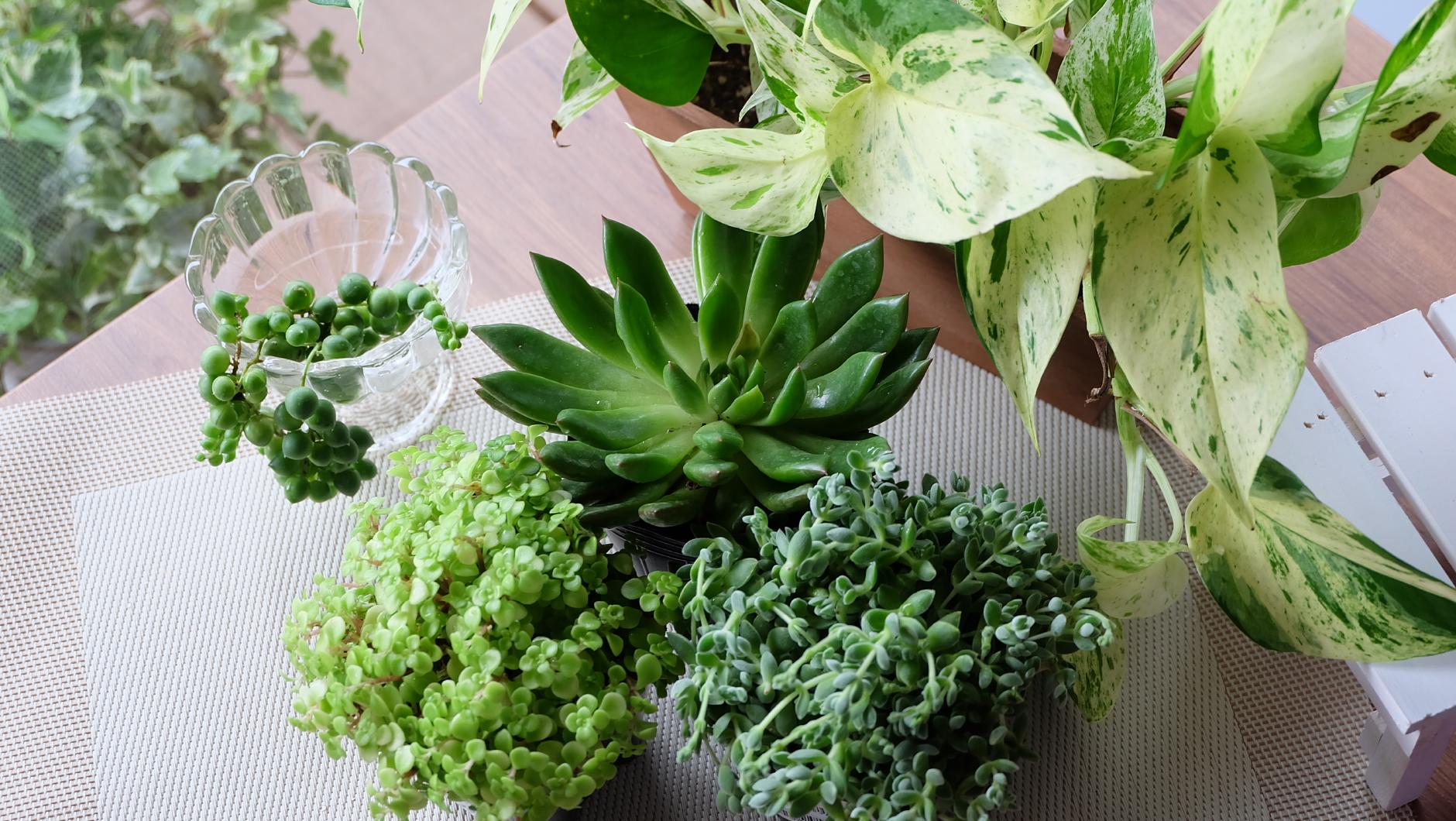 インテリアグリーンで癒しの空間に。人気の観葉・多肉植物7選|園joy